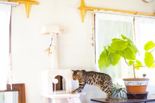 猫のためのキャットタワーが置かれたリビングルーム