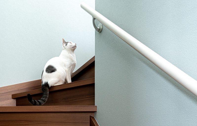 階段に座るオーナー様の猫ちゃん